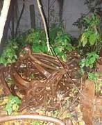 Гусянки на харвестер форвардер - Фото #1