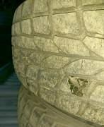 Зимняя резина Dunlop - Фото #3